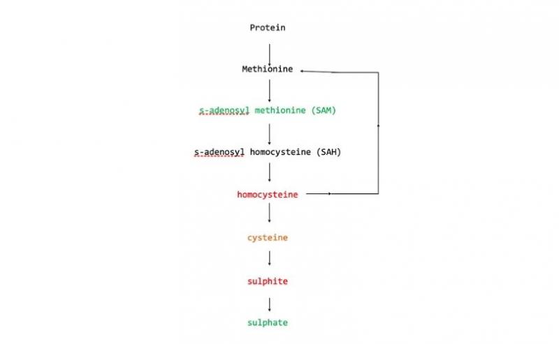 Diagram of methol groups