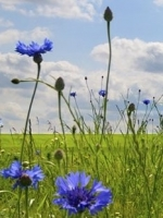 Allergy Testing & Consultant Nutritionist Faversham & Hythe, Victoria Shorland