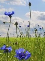 Allergy Testing & Consultant Nutritionist Faversham, Kent, Victoria Shorland