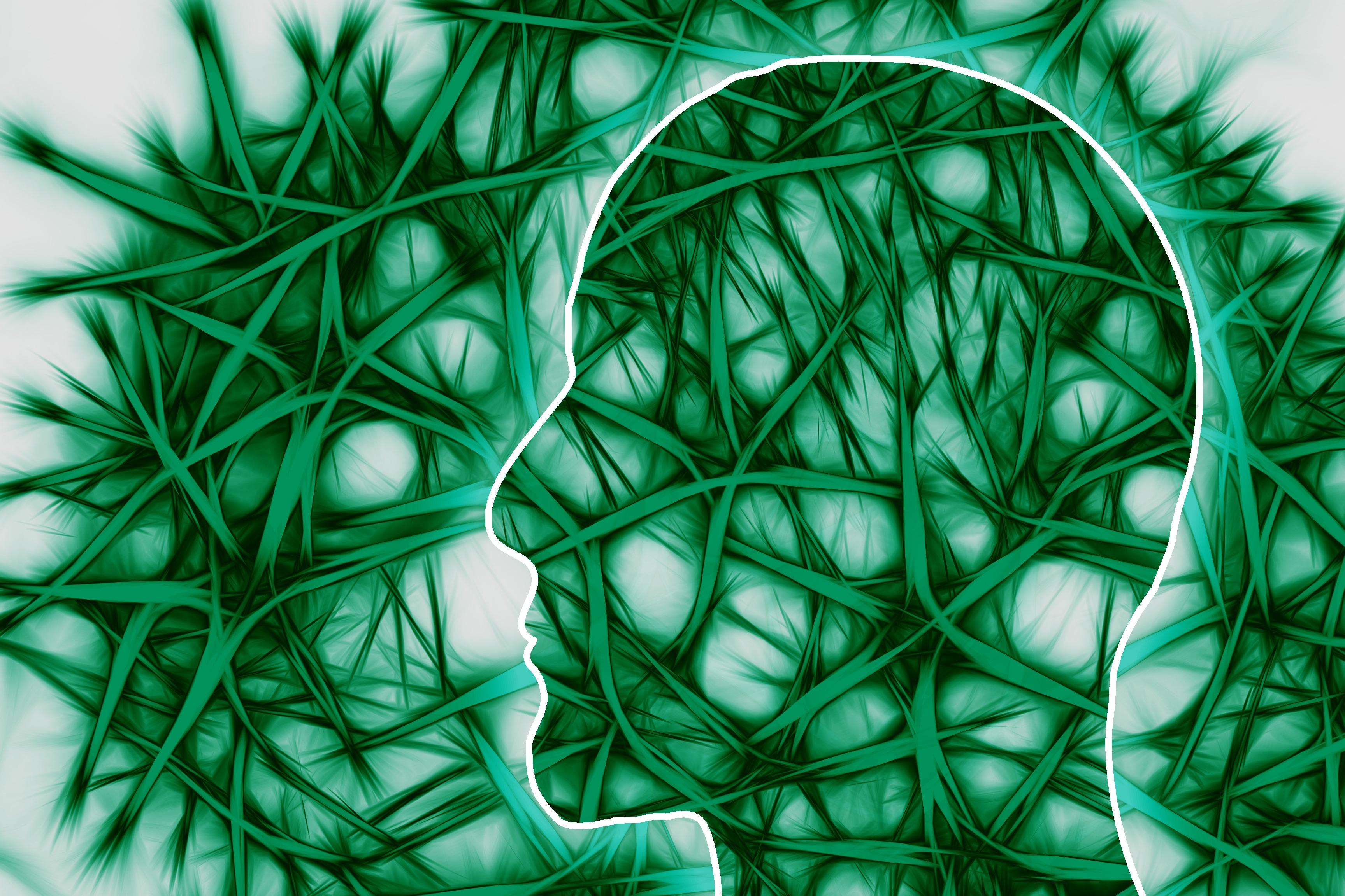 neural-pathways-221718.jpg