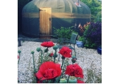 Poppies outside the smaller yurt
