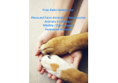 Free Animal Reiki Treatments