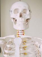 Portland Chiropractic Clinic