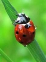 Libby Foxon-Ladybird Bowen Therapy
